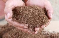米兰花的养殖方法和注意事项,手把手