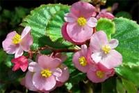 一年四季都开花的盆栽,盘点十种全年