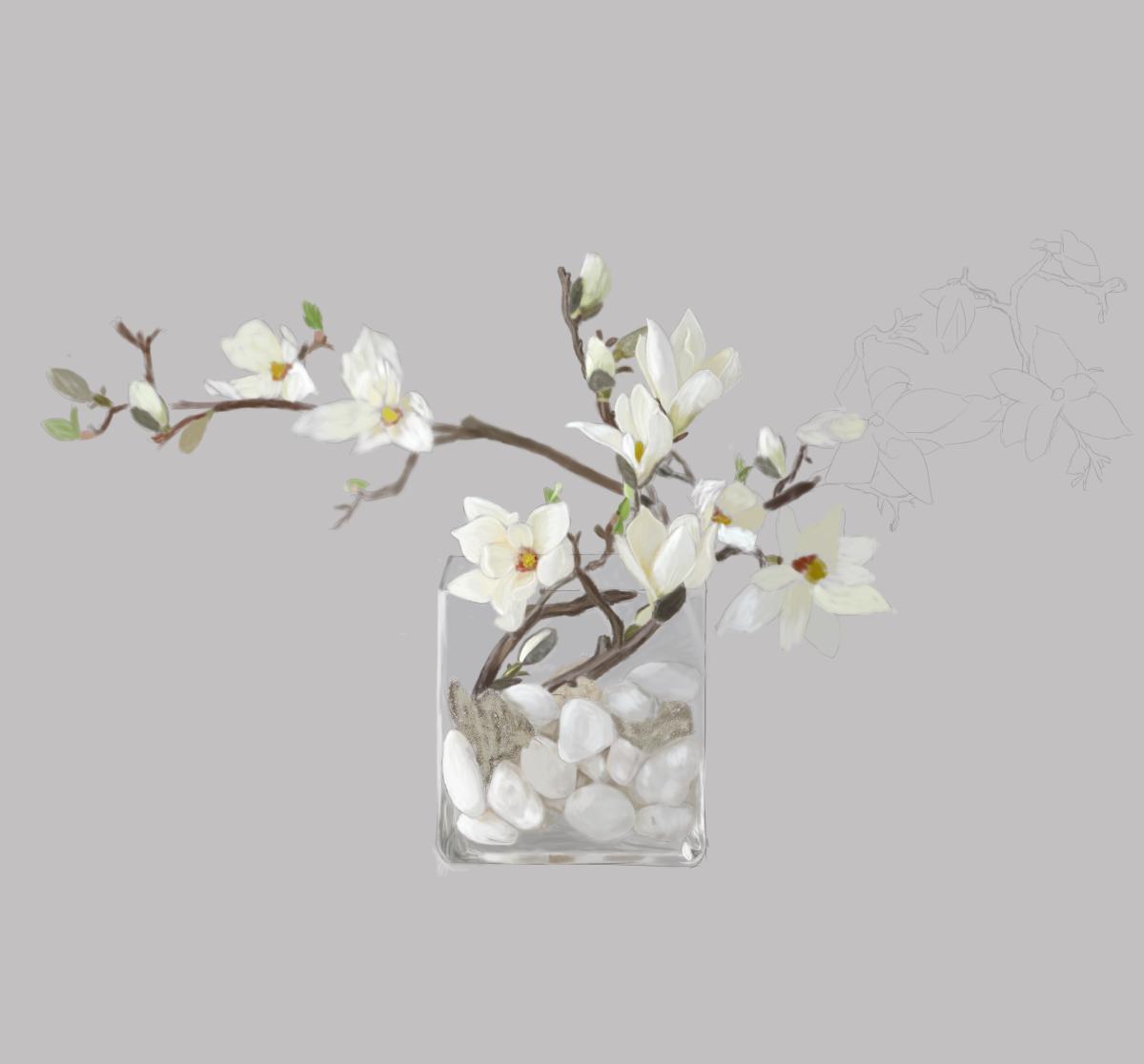 盆栽白玉兰花图片