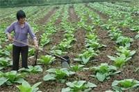 基肥和追肥有什么区别,基肥改善土壤追肥提供养分