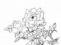 蔷薇花简笔画手绘