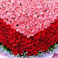 999玫瑰花图片大全及