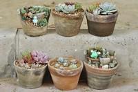 迷迭香适合用什么盆土,瓦盆栽种透气能力强
