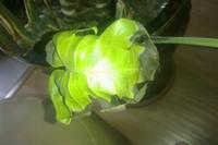 龟背竹叶子发黑是怎么回事
