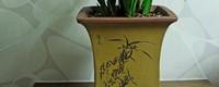 种兰花为什么要高腰盆