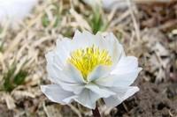 北方冬天适合养什么花,盘点10种极耐