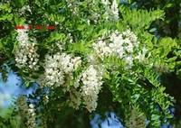 各种植物花图片