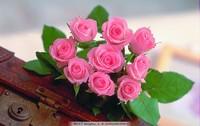 一大束粉色玫瑰花图片