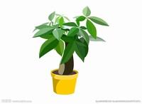 绿色植物图片素描
