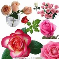 红玫瑰花与白玫瑰花图片