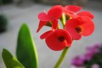 家里再穷也要养这3种花,四季常开,适