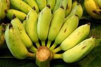 香蕉的种类及介绍(内含品种图)
