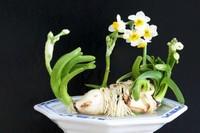 水仙花的养殖方法水培,4个步骤使其