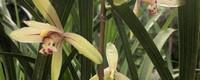 磷酸二氢钾使用方法兰花