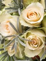 瓶装白玫瑰花图片大全大图