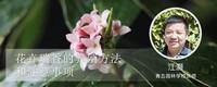 花卉瑞香的养殖方法和注意事项