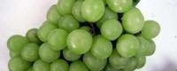 葡萄有几种