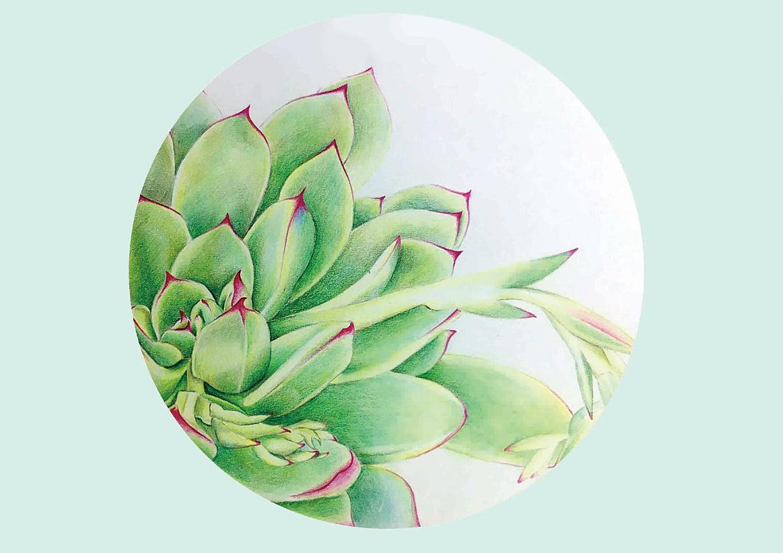 彩铅花卉手绘图片