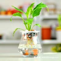 适合水培的植物,常见的室内水培植物