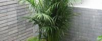 竹子的种类