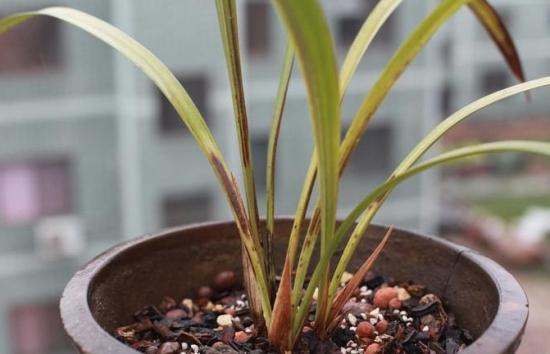 怎样判断兰花生病:从叶子的健康状态