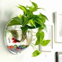 鱼缸水培绿萝图片
