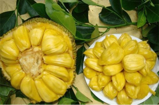 菠萝蜜过敏怎么办?掌握这三个方法帮你轻松化解!