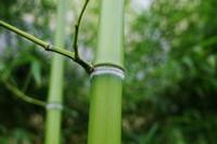 为什么院里不栽竹子,风水不好易招阴