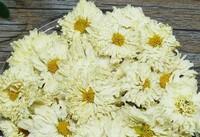 黄山贡菊的功效与作用及禁忌