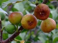 在家里超级容易种植的水果,不出门在家也能吃水果
