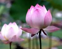 春季赏花的唯美心情句子,暖风徐徐,春光明媚