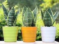 上班族办公桌上必备的绿植 便宜又好养!