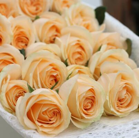 香槟玫瑰适合送哪些人,最适合送给恋人的花朵