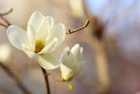 春天开的花有哪些 春天开的常见的花