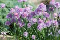 10种最美紫色的花,你喜欢哪一款?