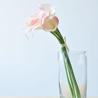 马蹄莲的养花技巧!养出漂亮的马蹄莲!