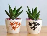 芦荟胶的十二大功效与作用,古埃及称之不朽的植物