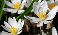 多种清新花卉,让心情愉悦,治愈性花卉你还知道哪些?
