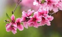 三月开什么花?这五大花卉观赏价值极高