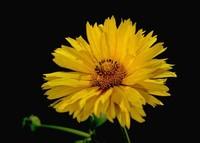 高颜值的七种花卉,入夏必养