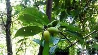 八种可食用的植物种在院子和阳台,一年四季吃喝不愁,避免养在遮阴处
