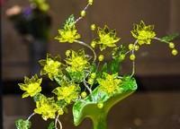 水晶花的花语十分多样是再好不过的表白之花