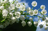 世界上十大最妖娆最毒的花,快来看看普及一下知识吧