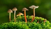 植物与人类的关系紧密,生活方式不可缺少的环节