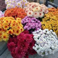 治愈系花卉点亮你的心情,花儿让生活更有激情!