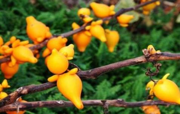 世界上八种最稀奇古怪的水果,快来看看吧