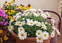 好好的养花,好好的养心 我的阳台花园