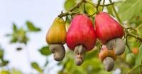 多种奇异水果,快来看看你吃过几个?都吃过是果神