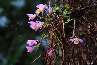 石斛兰的种植栽培技术与方法以及石