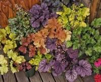 叶子比花还要好看的植物,开花时赏花,谢花时赏叶